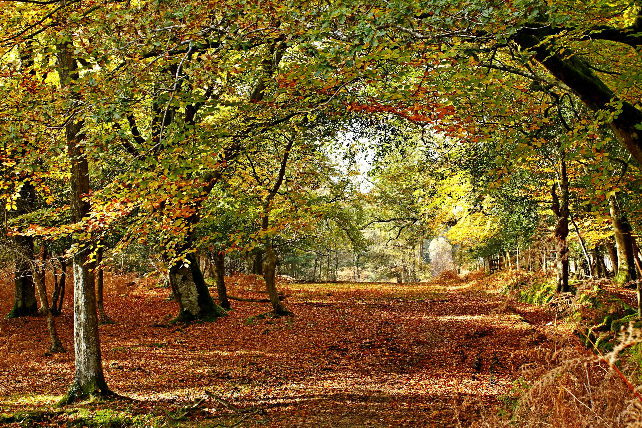 Autumn Breaks in the New Forest