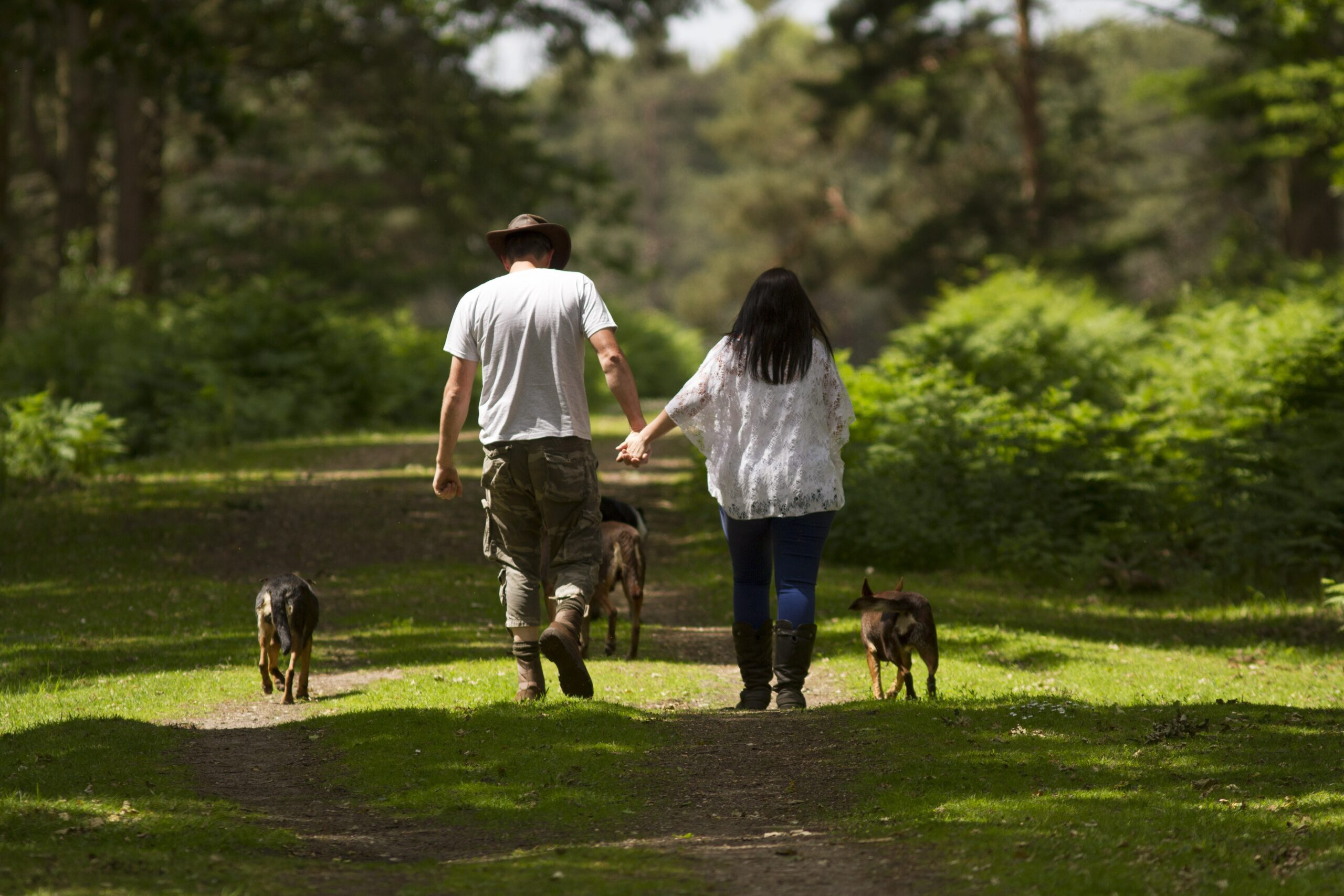 New Forest dog-friendly attractions & places to go