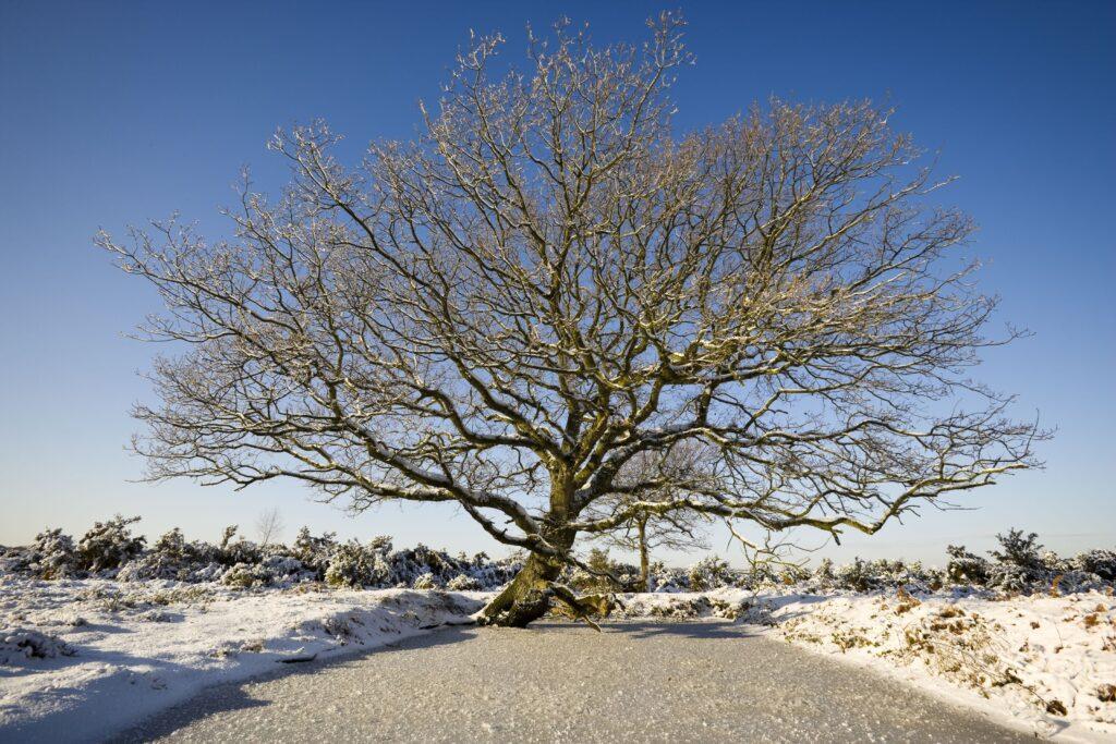 Single tree in snowy landscape